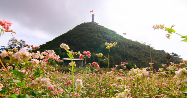 Tháng 11 lên Hà Giang 'hẹn hò' cùng hoa tam giác mạch