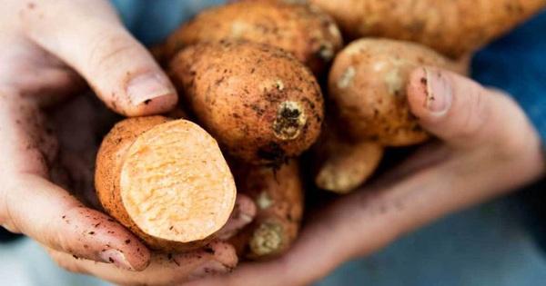 4 loại thực phẩm đừng nên ăn cùng khoai lang nếu không muốn bị đau bụng, đầy hơi, trào ngược dạ dày - kết quả xổ số vĩnh long