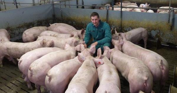 Thịt lợn từ Đức bị Trung-Nhật-Hàn