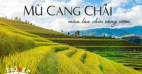 Thu năm nay nhất định phải lên Mù Cang Chải ngắm lúa chín vàng ươm trên những thửa ruộng bậc thang: Đẹp đến ngây ngất lòng người!