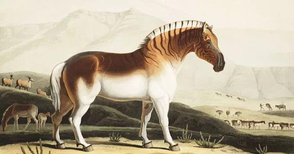 Đã tuyệt chủng một thế kỷ, liệu loài ngựa vằn ''tàn lụi'' này có thể thực sự sống lại?