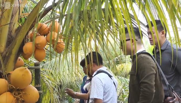 Kỹ sư TP HCM dành 2.000 m2 đất làm vườn dừa đón khách miễn phí